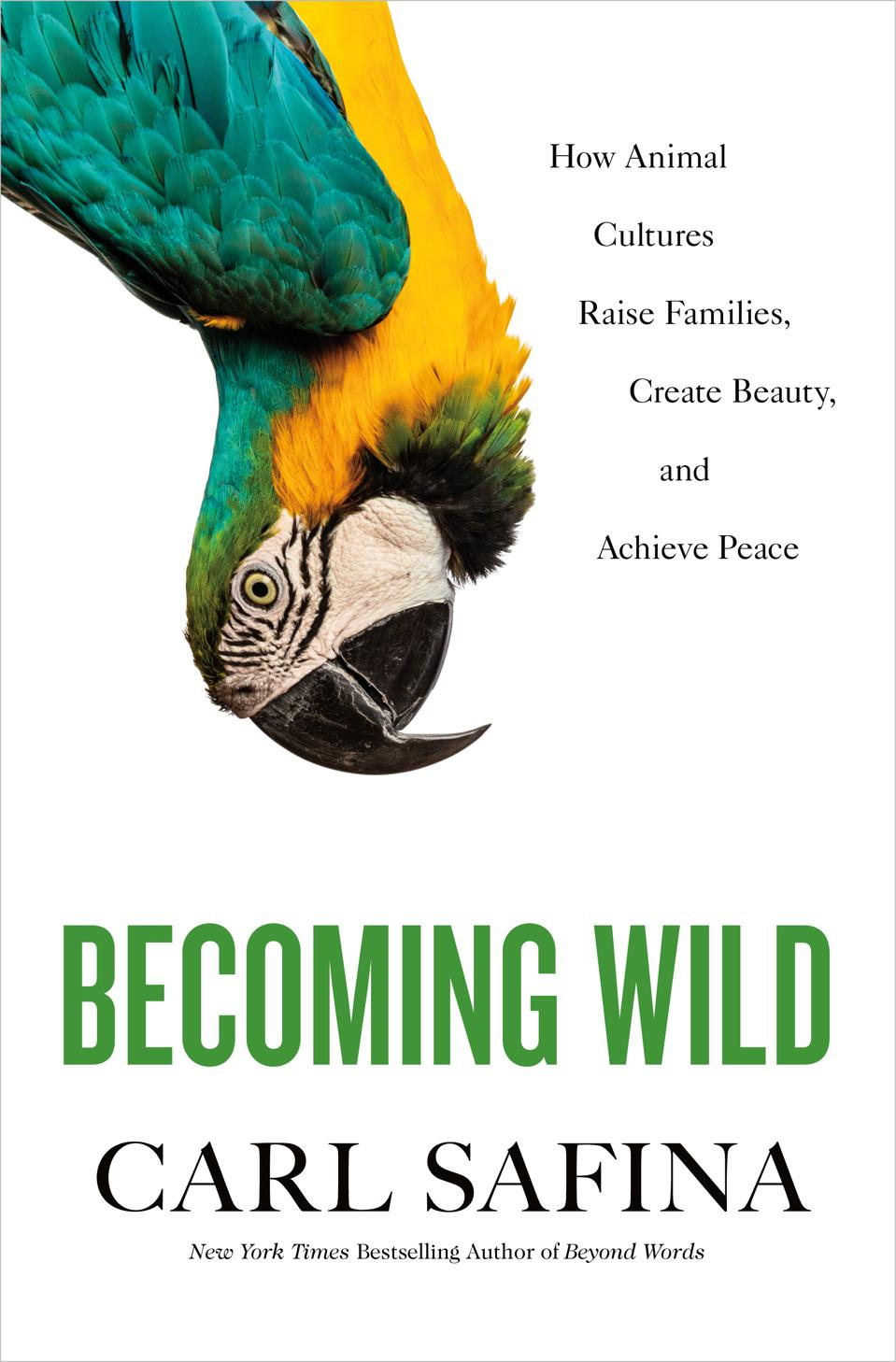 ″Becoming Wild: How Animal Cultures Raise Families, Create Beauty, and Achieve Peace″ book