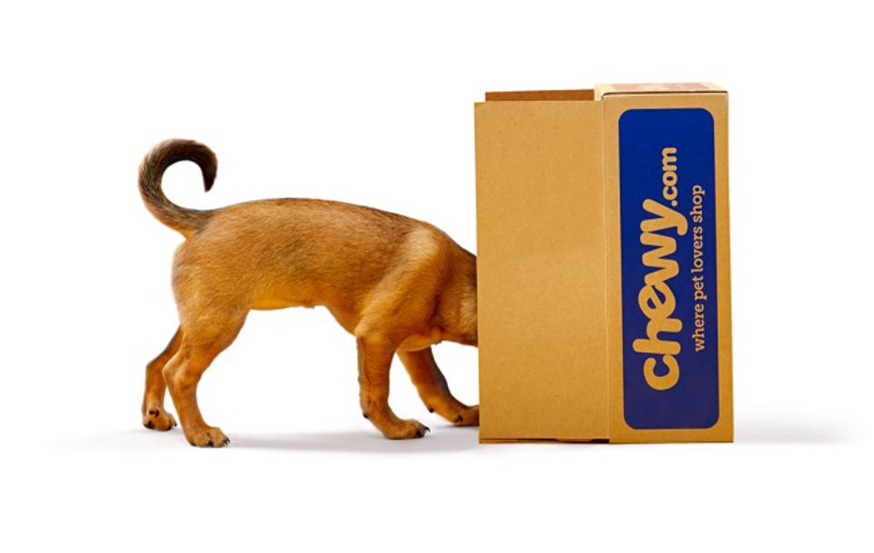 Dog looking inside chewy.com box