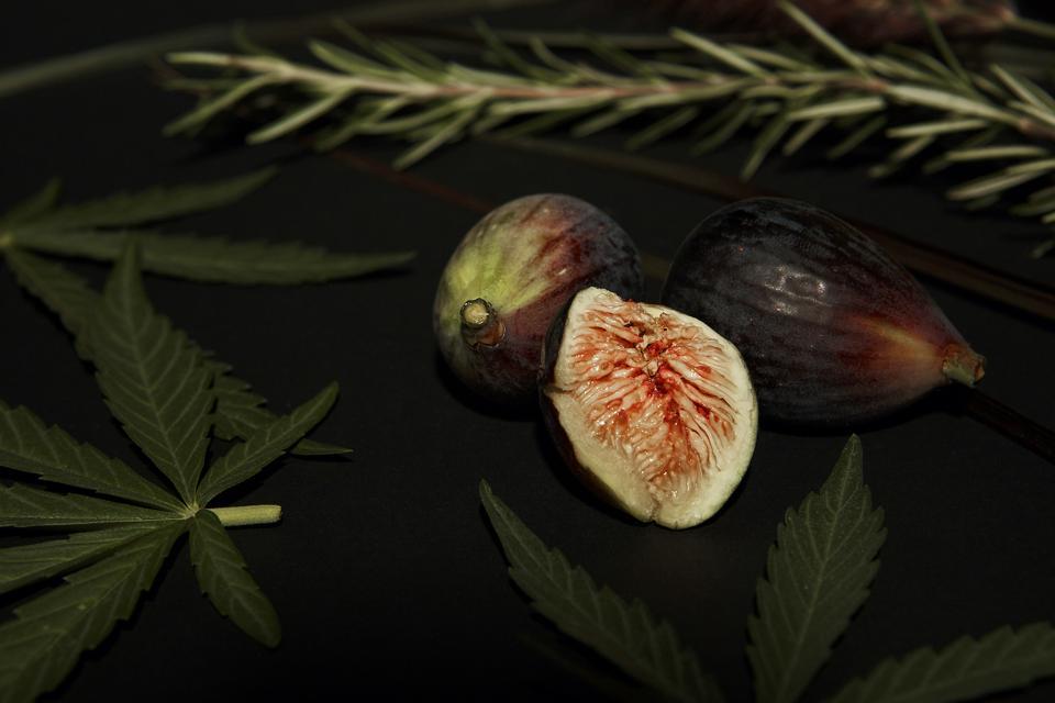 Fresh figs from Rotman's farm.