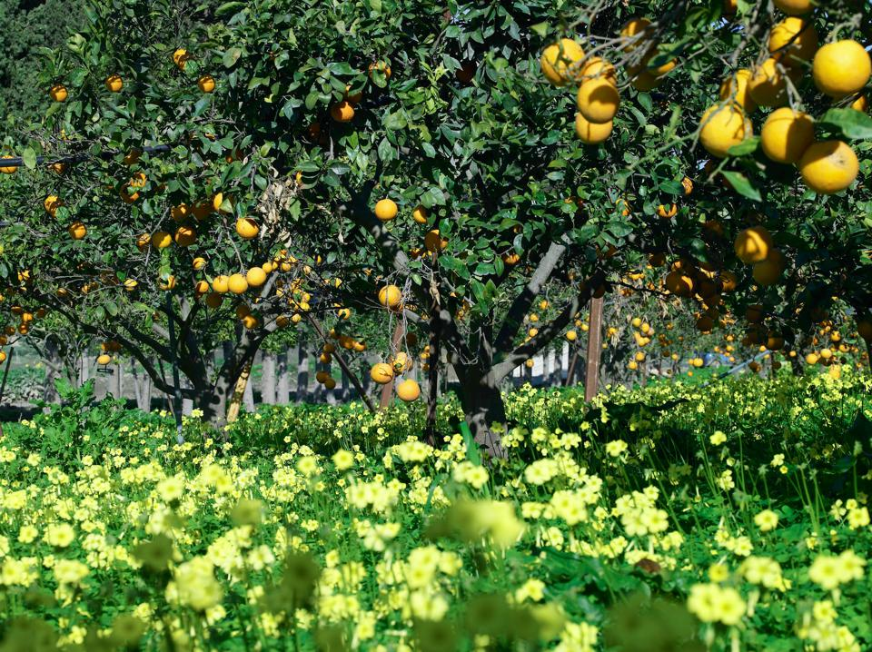 Sicily, Irene Forte, Rocco Forte, beauty, skincare, organic, farm, lemons, sustainable
