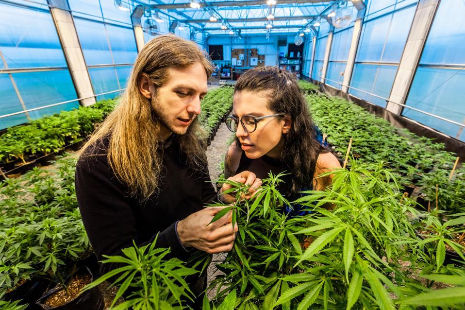 Emma and Matt with plants