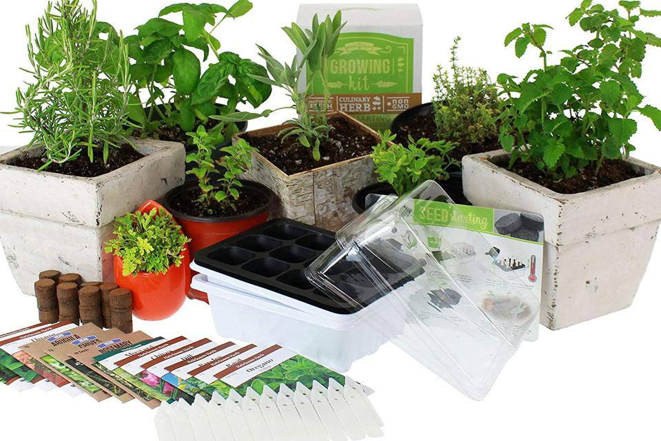 Indoor garden starter kit