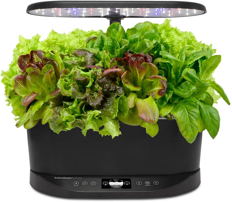 AeroGarden herb garden with greens