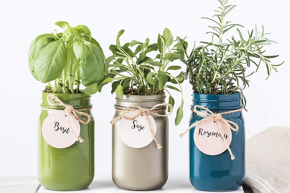 Three mason jars with herbs