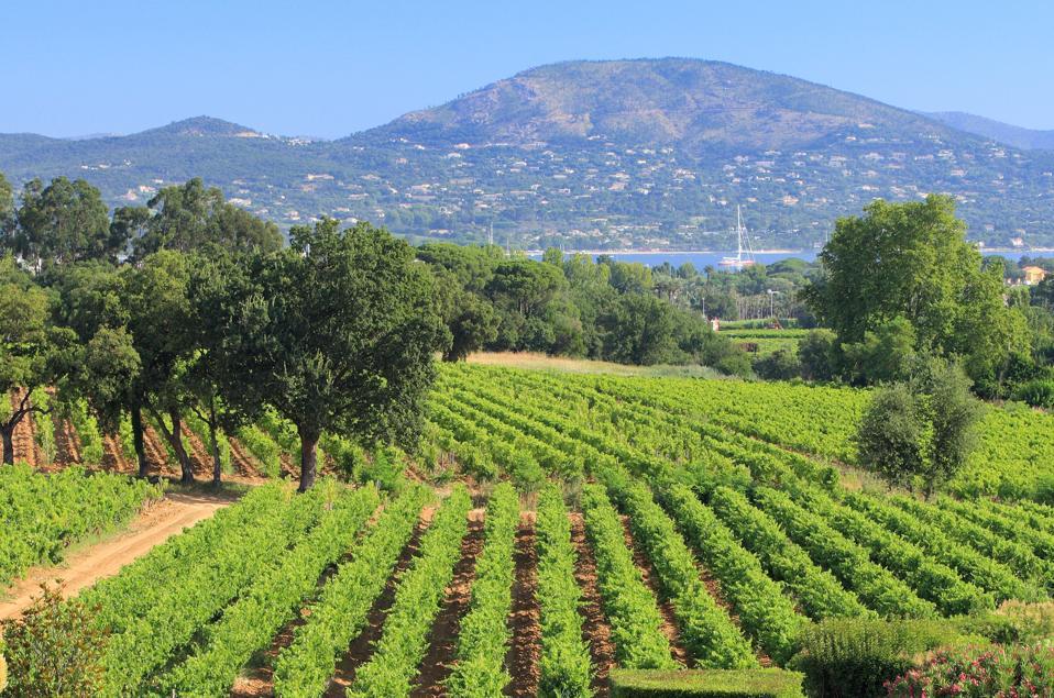 Mediterranean Sea, Provence, France, Vineyards