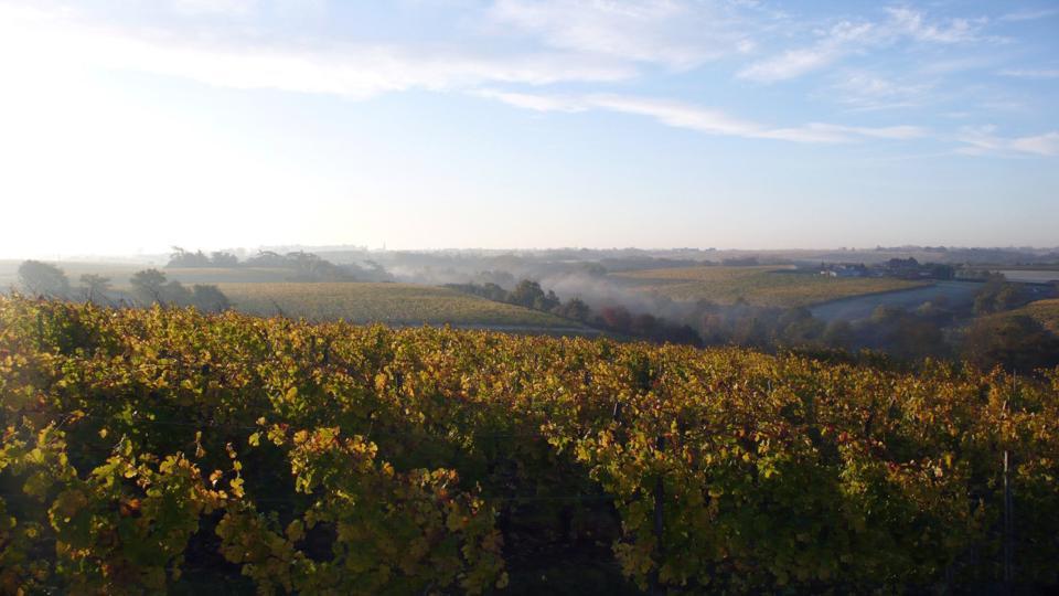 Savennières is the Loire Valley's smallest appellation.