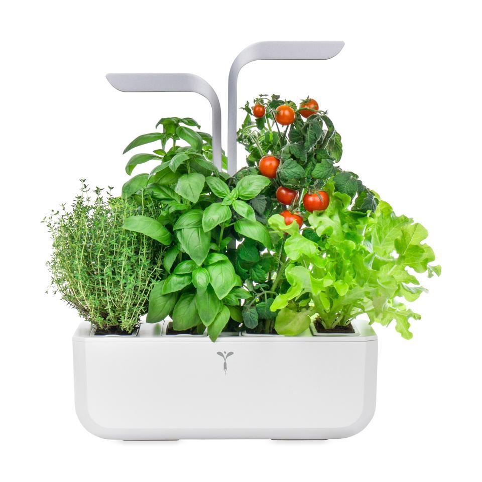 Best in-home gardening kits for Father's Day: Veritable Smart Indoor Garden