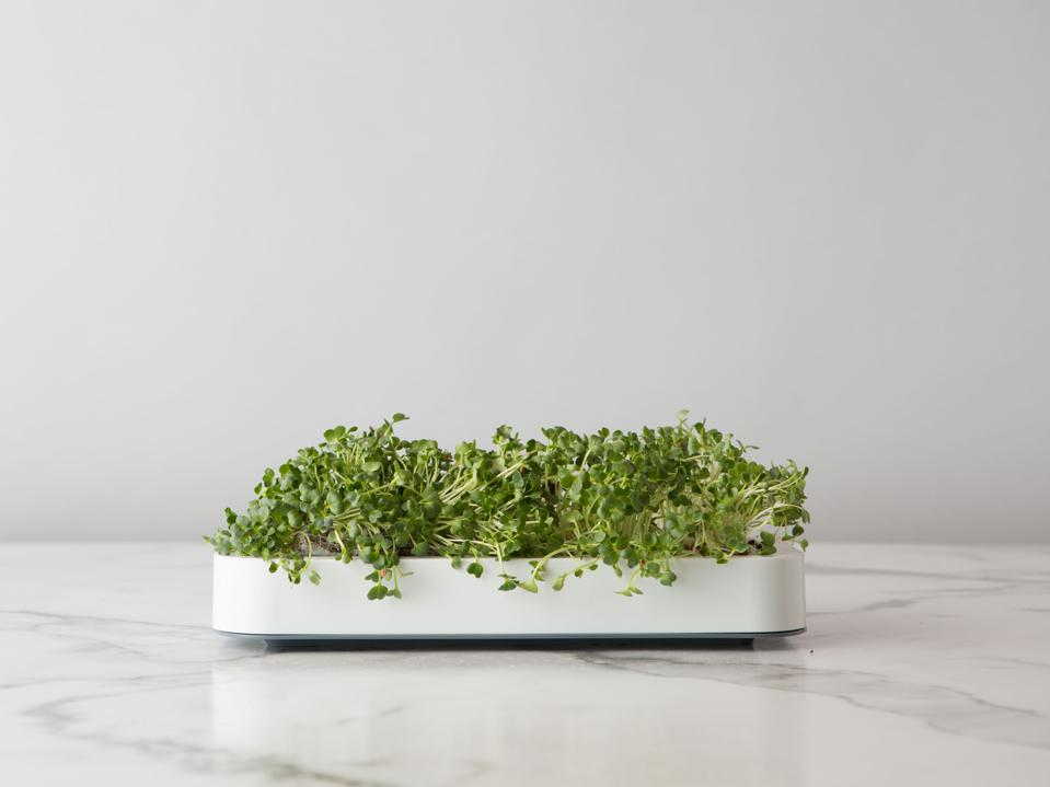 Best in-home gardening kits for Father's Day: Chef'n Countertop Microgreen Grower