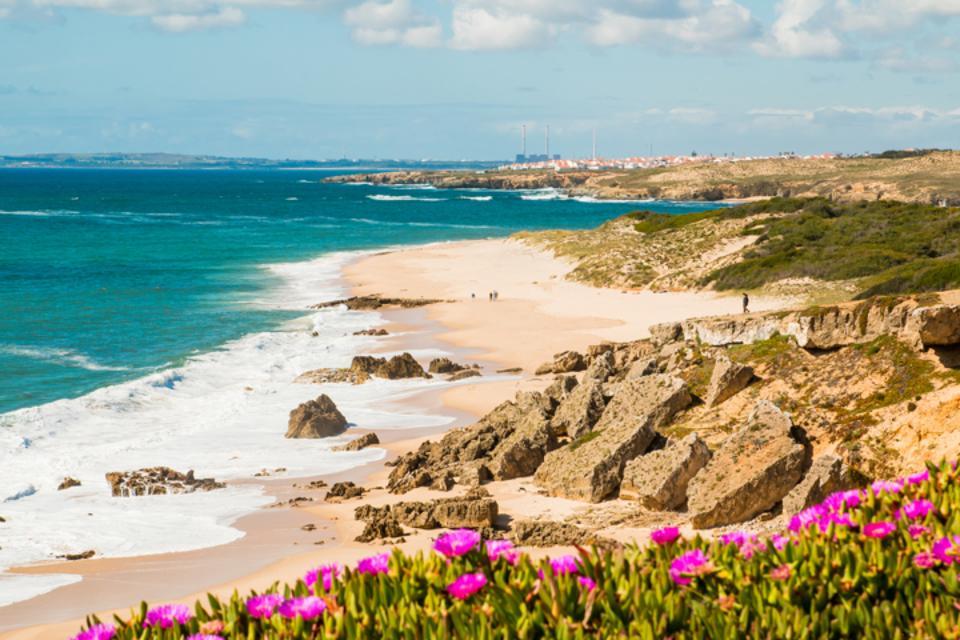 Flowers in a beach in Alentejo, Portugal
