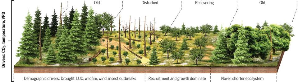 Recovering Forests