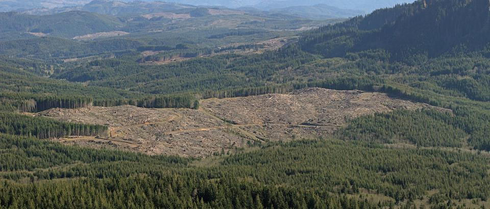 Clearcutting along the Lewis and Clark