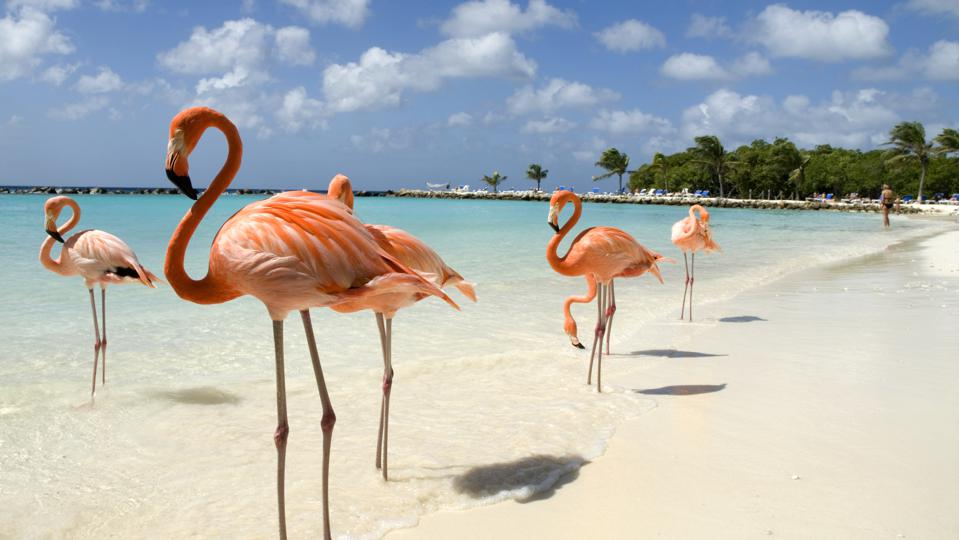 Flamingos on the Beach in Aruba (the location of Diamond PR's first hotel client)