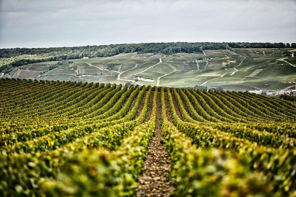 Champagne Henriot's Vineyards