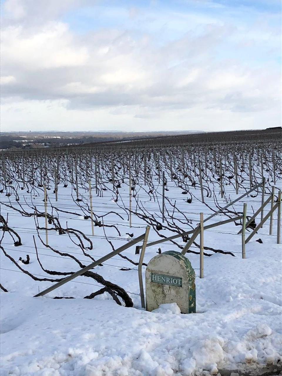 Champagne Henriot's Vineyards During Winter
