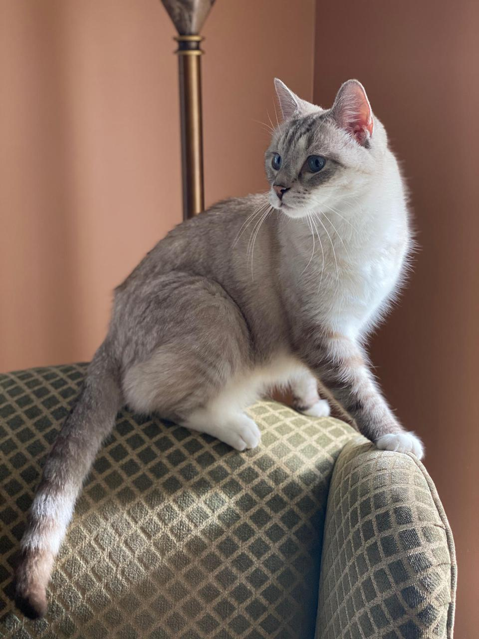 Cat, named zoloft