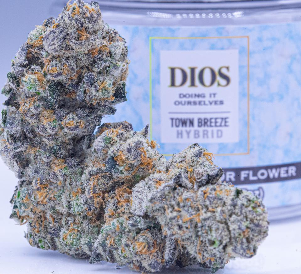 A gorgeous nug of Town Breeze from DIOS