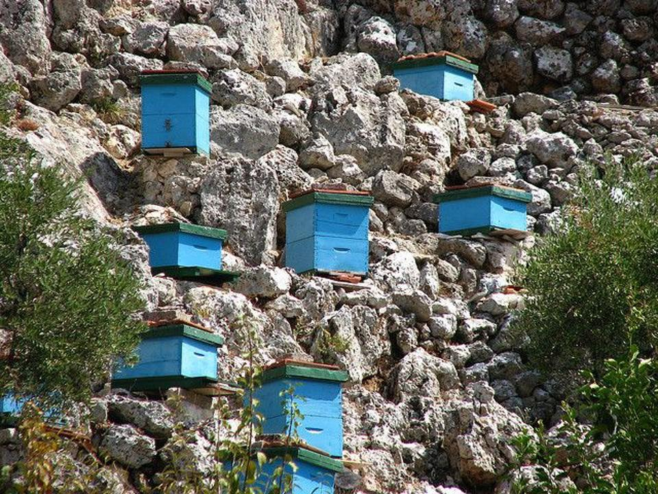 The honey bee hives perched high atop the mountains of Greece, collecting the Loi Meli Organic Wild Forest Black Honey.