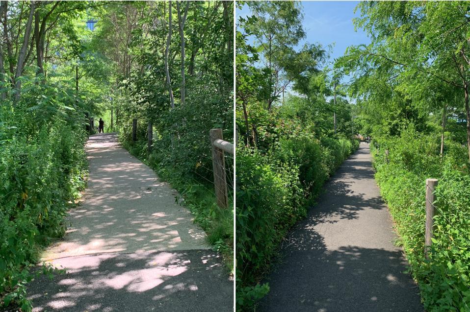 Winding paths in Brooklyn Bridge Park