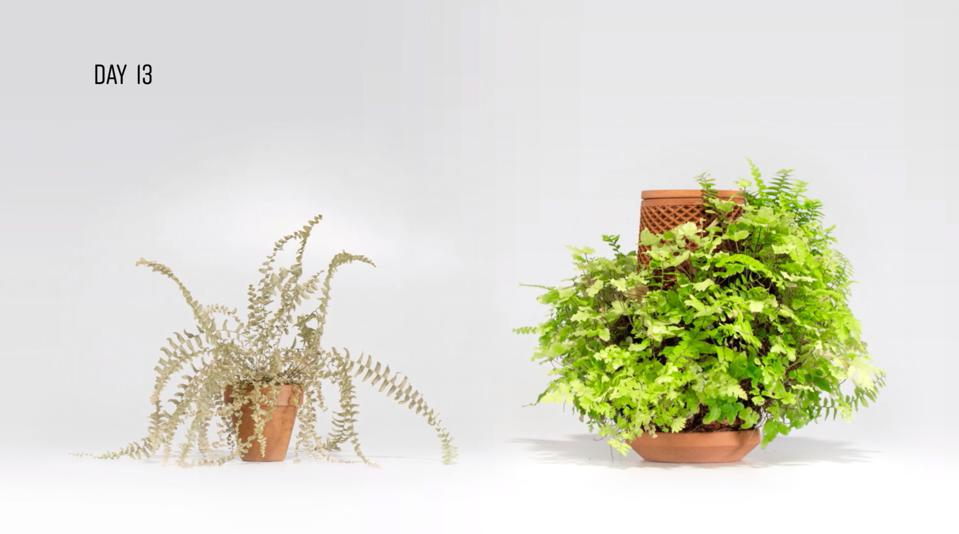 picture of a plant in a pot and a plant growing on the outside of the terraplanter