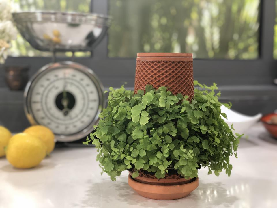 the terraplanter pot on a countertop showing growing greens