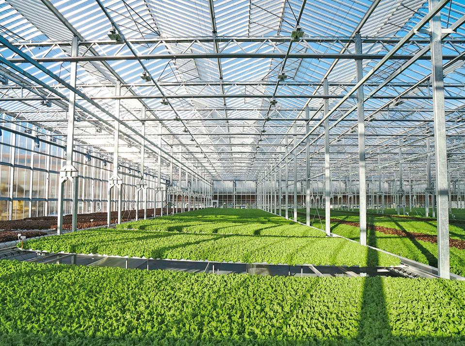 Gotham Greens takes a different approach, relying on natural sunlight.