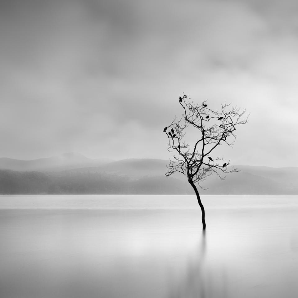 a bare tree with birds in the lake of Kastoria, Greece