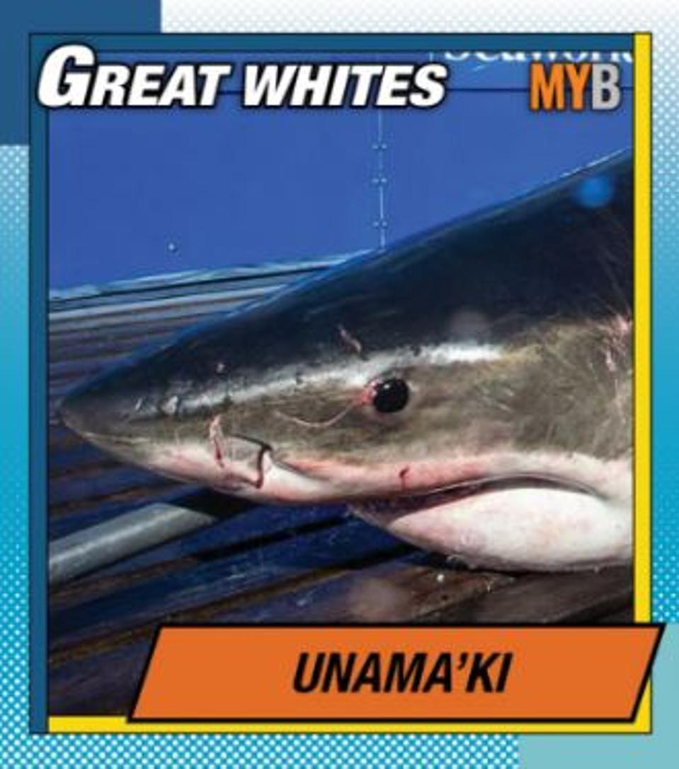 Unamaki, a great white shark
