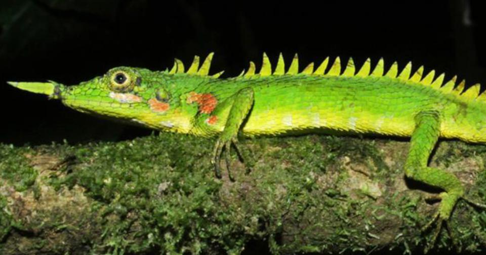 Color photo of a bright green lizard on a tree branch.