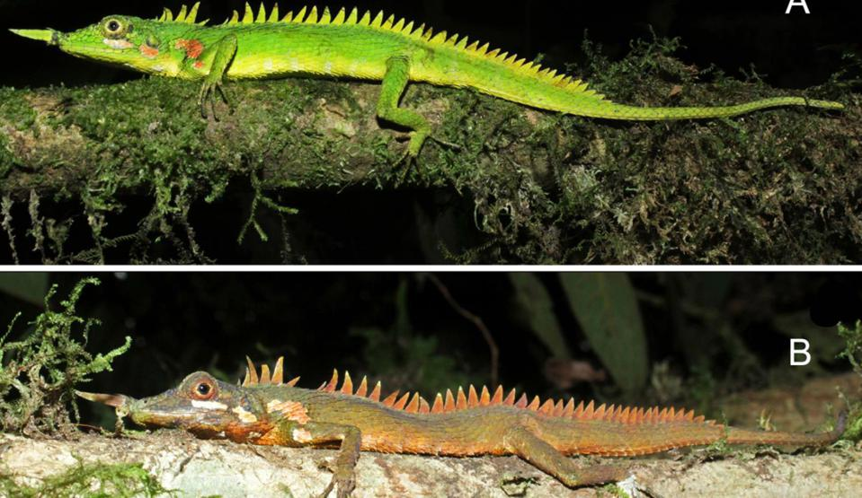 Top color photo of a bright green lizard; bottom color photo of a rusty brown lizard.