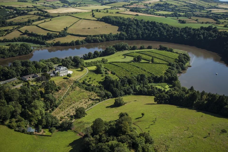 An overview of Sharpham vineyards in Devon, England.