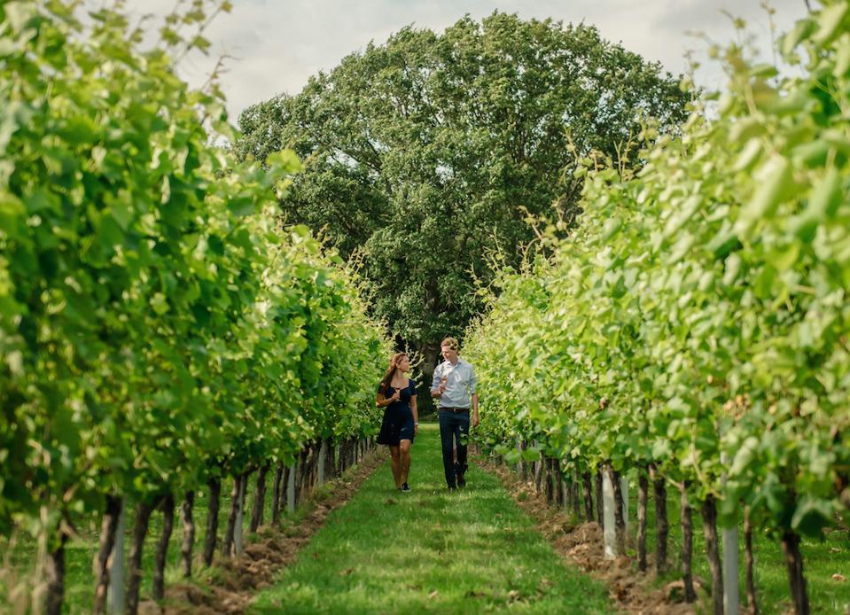 The vineyards of Gusbourne wine estate in Kent, England.