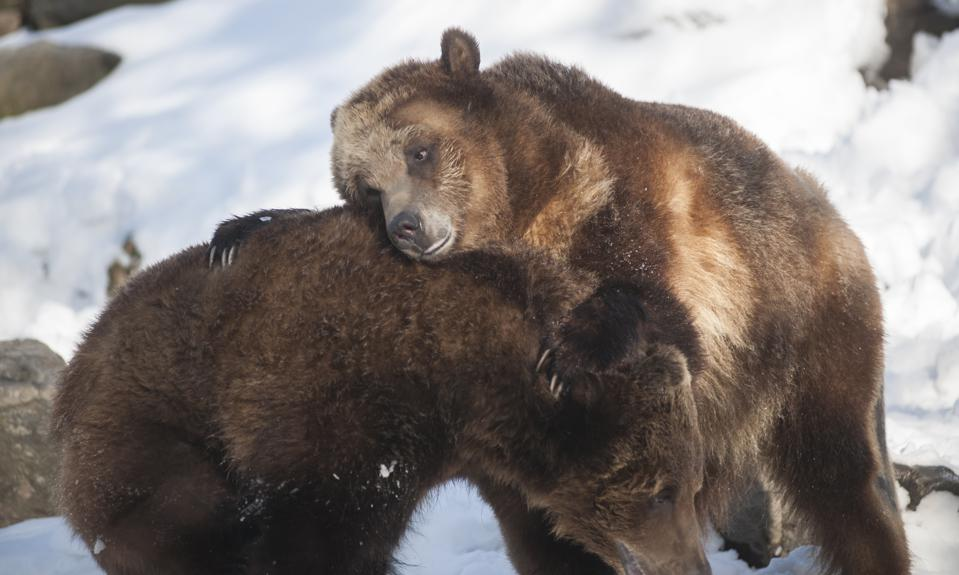 Grizzly bears represent the bear market