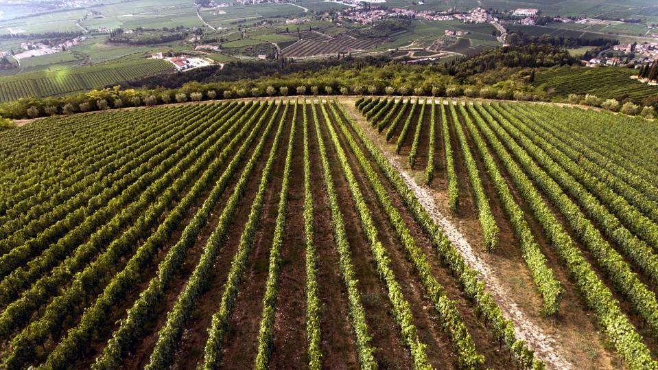 La Fabrisera estate of Tedeschi, near Sant'Ambrogio in Valpolicella, Valpolicella Classico