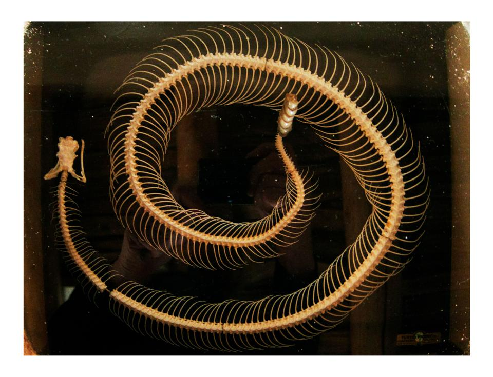 Annie Liebovitz photo of a rattlesnake skeleton in the home of Georgia O'Keefe