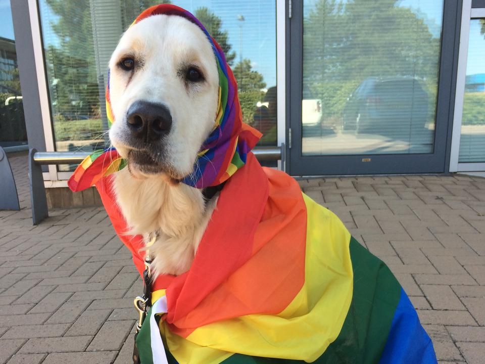 Pride Dogs For Guide Dogs campaign sees dog dressed in lgbt pride flags