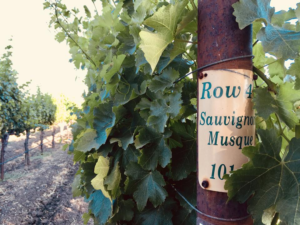 Tom Gamble makes two expressions of Sauvignon Blanc in Napa Valley.