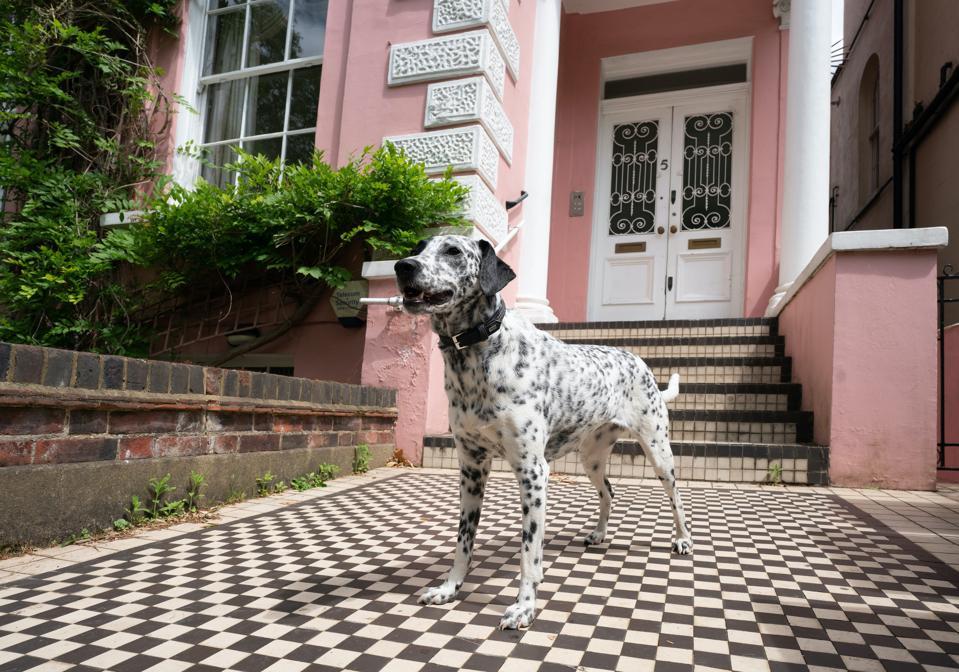 Dalmatian outside house