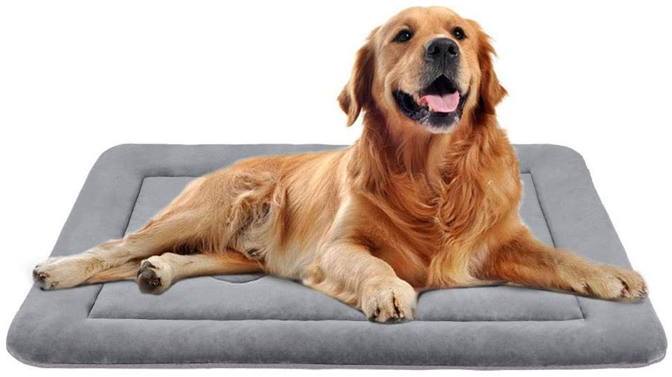 JoicyCo Crate Pad and golden retriever