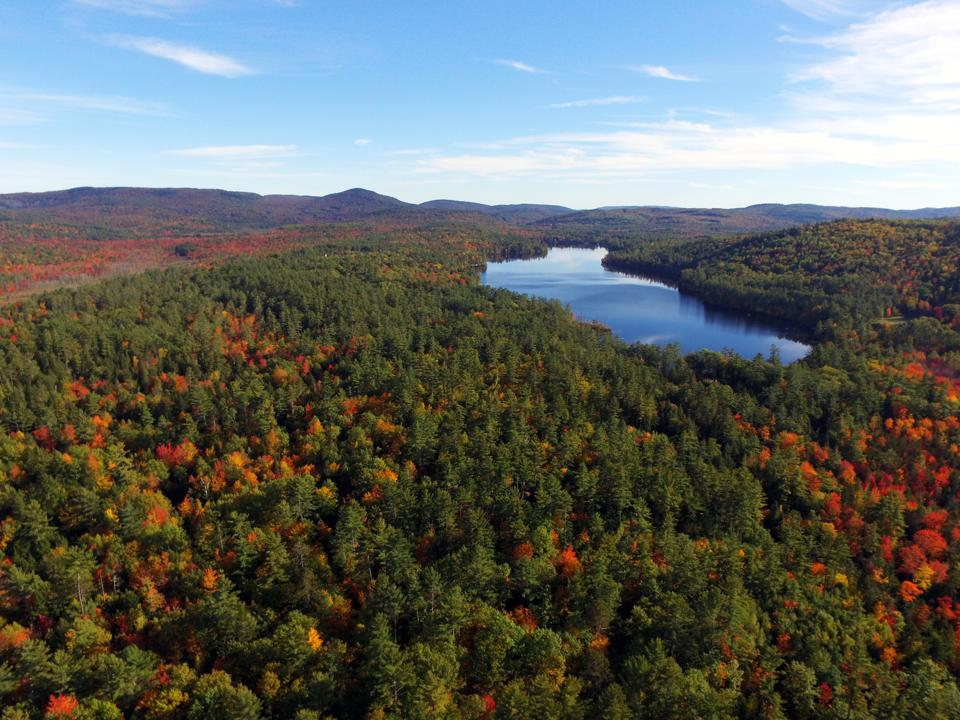 A photo of a pond at a forest in Maine acquired by The Conservation Fund for protection
