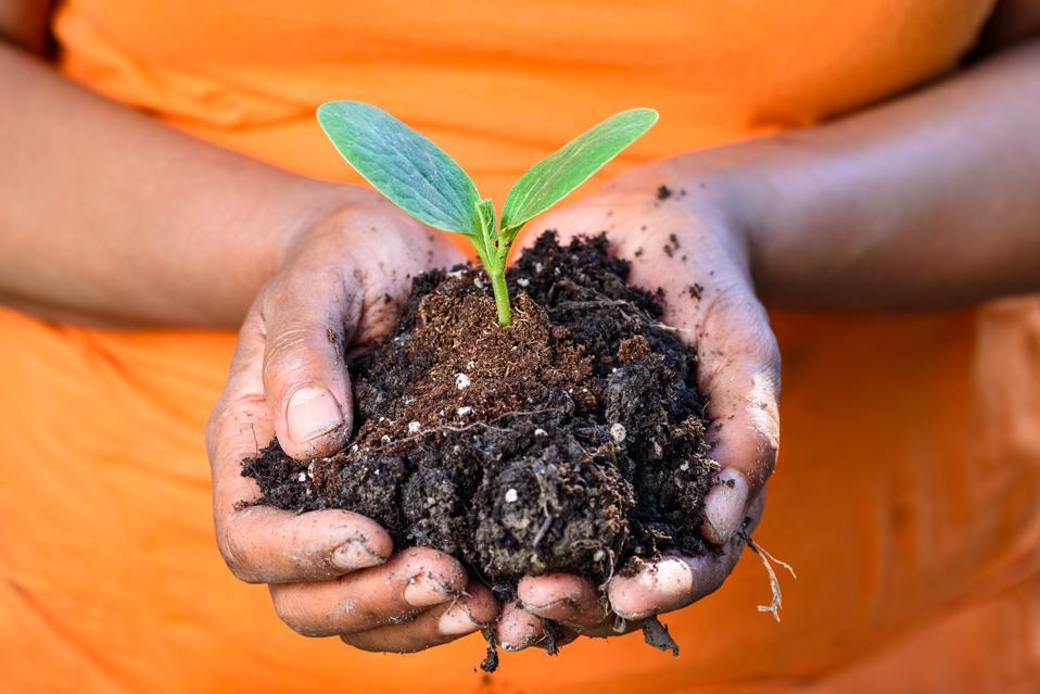 Healthy soil is vital to human health.