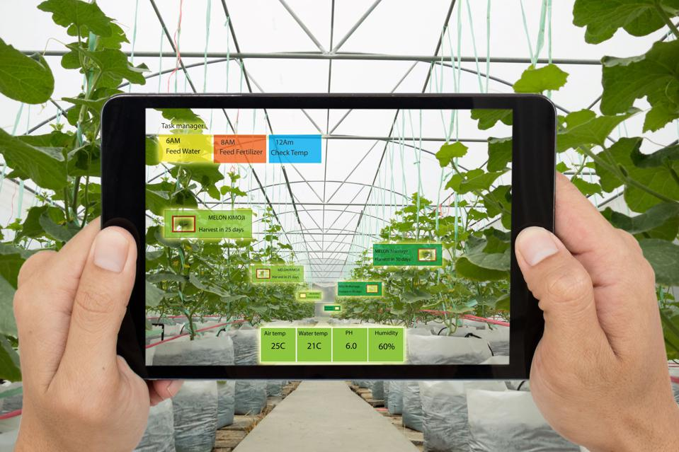 A table showing indicators superimposed through augmented reality in a greenhouse.