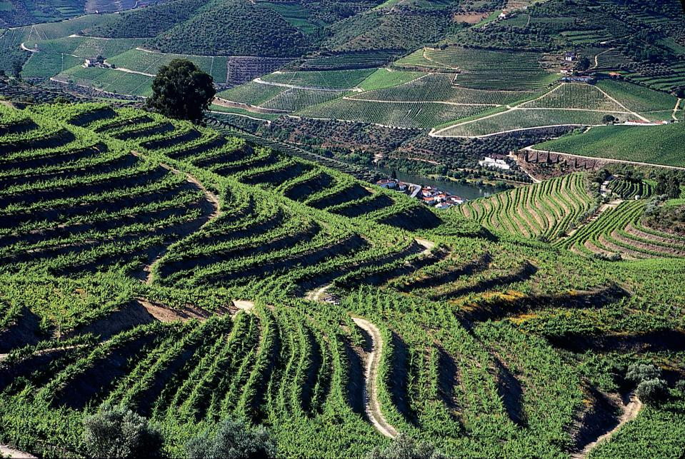Terraced vineyards at Quinta Malvedos, in Portugal's Douro Valley.