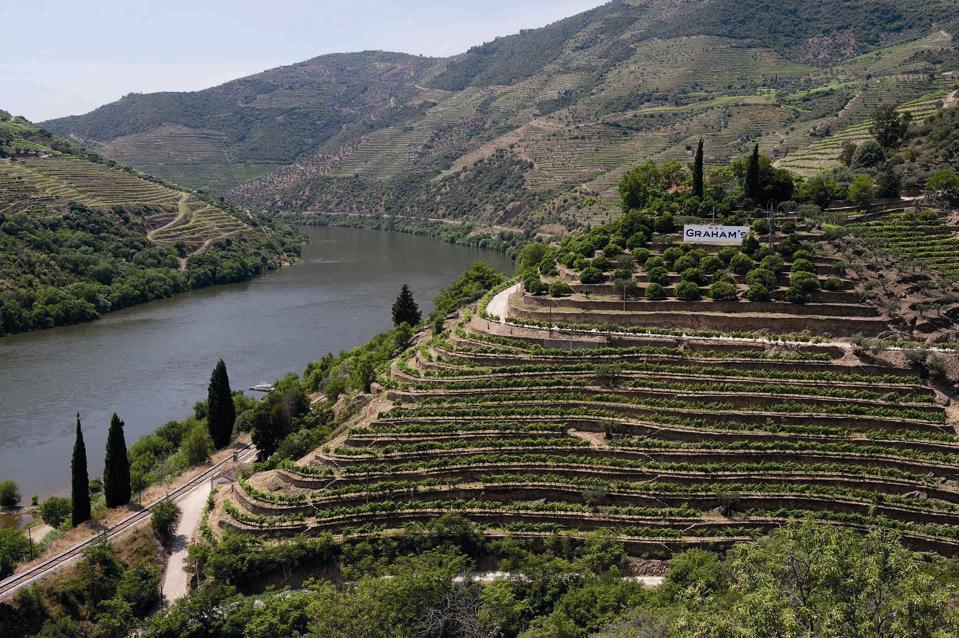 Graham's stone terraces the steep banks of the Douro River.