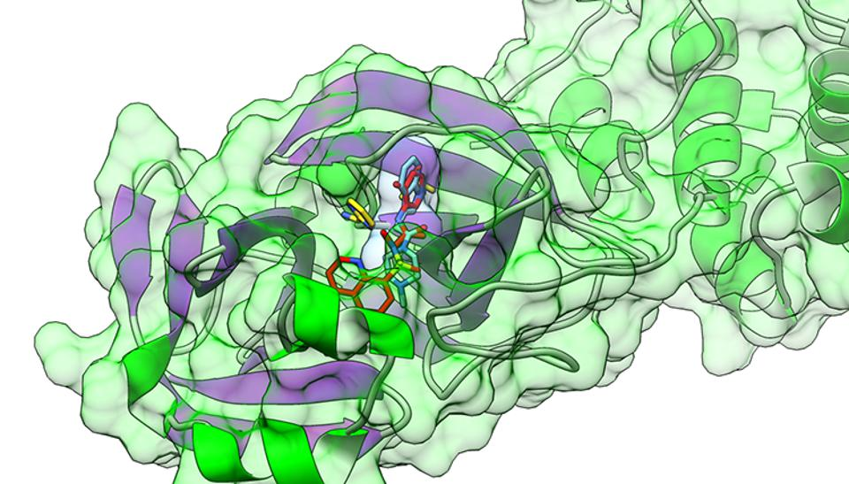 The solid green and solid purple regions represent the protein backbone of the COVID-19 main protease, with the protein surface shown partially transparent. The multi-colored sticks are different drug molecules bound to the active site of the protease.