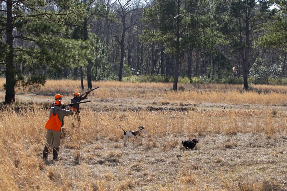 Men shooting for quail