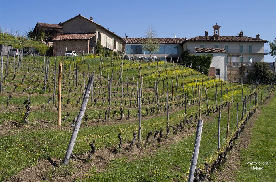 Detail of Cerequio Vineyard at Michele Chiarlo estate in La Morra