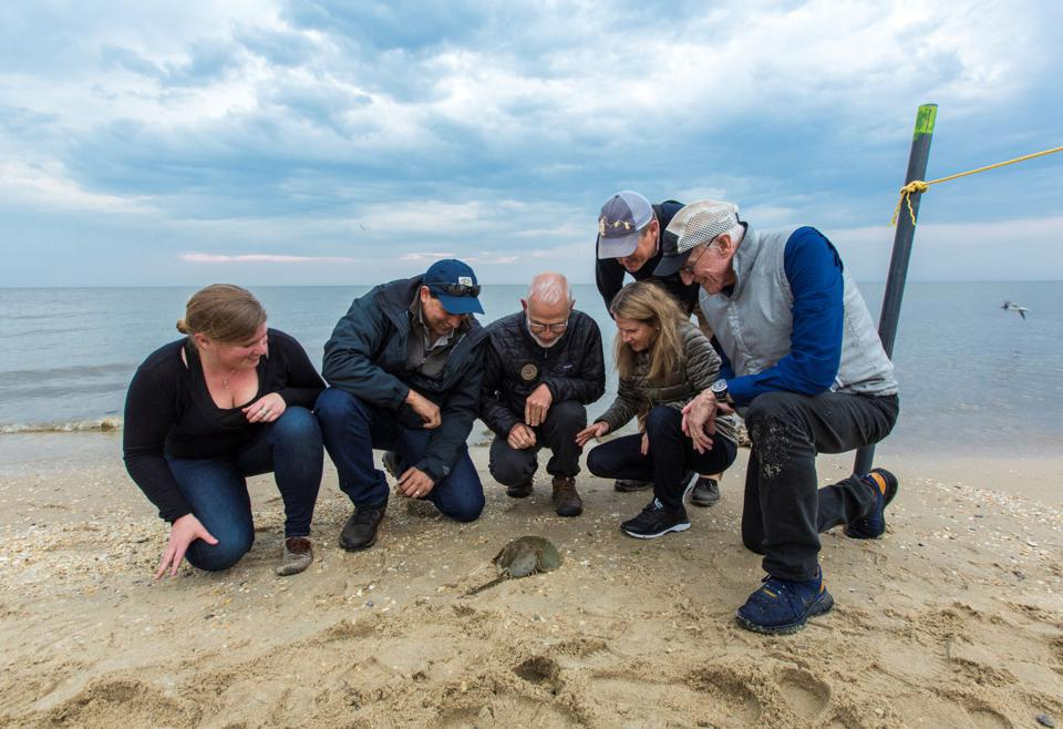Californian BioTech NGO, Revive and Restore at the launch of their Horseshoe Crab campaign in 2018.