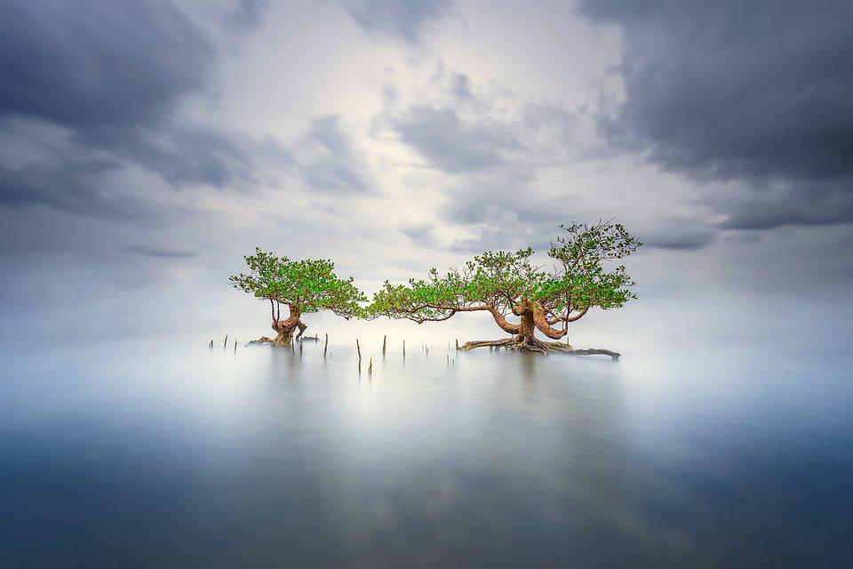 trees in the middle of a blue lake
