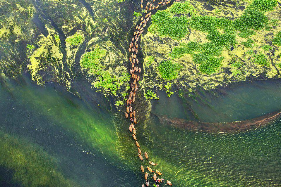migrating birds on a river in Bangladesh