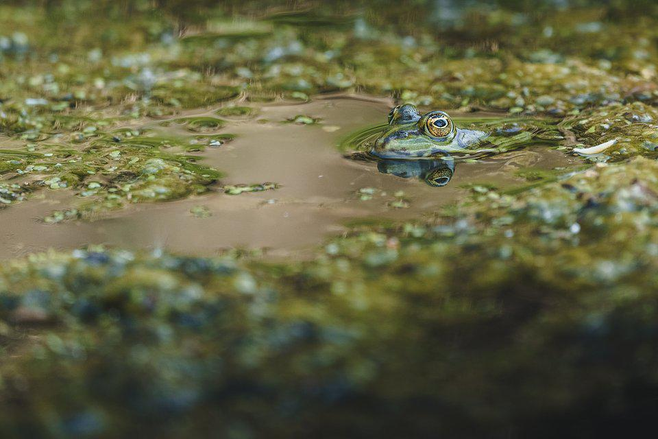 green frog in green pond